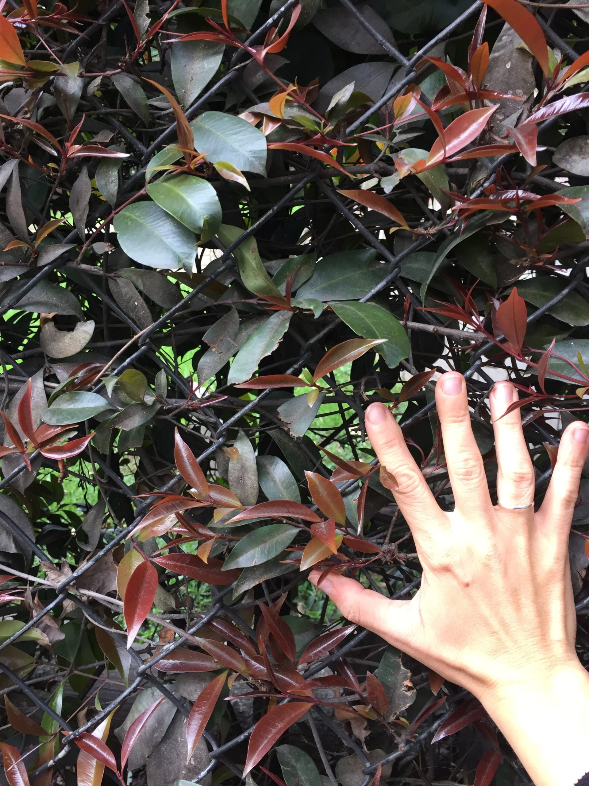 hands holding onto a steel fence with leaves