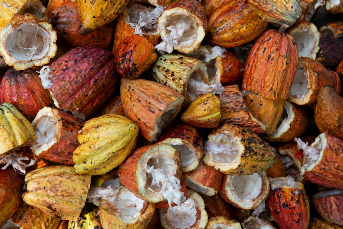 colourful cacao shells