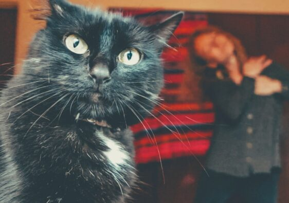 black cat with woman in background